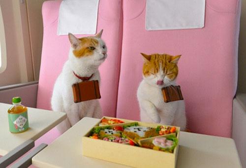 tourisme chat japon